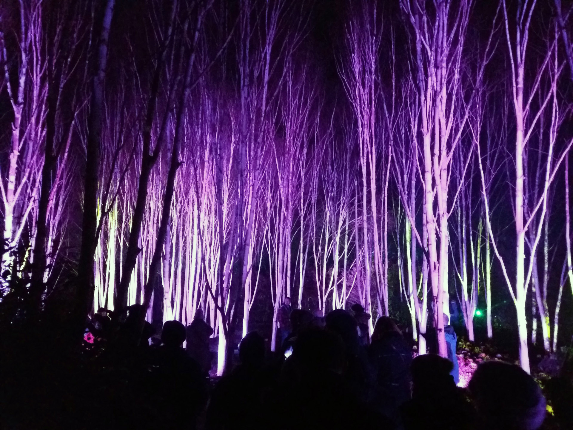 Winter Lights Anglesey Abbey early winter celebration dark lights
