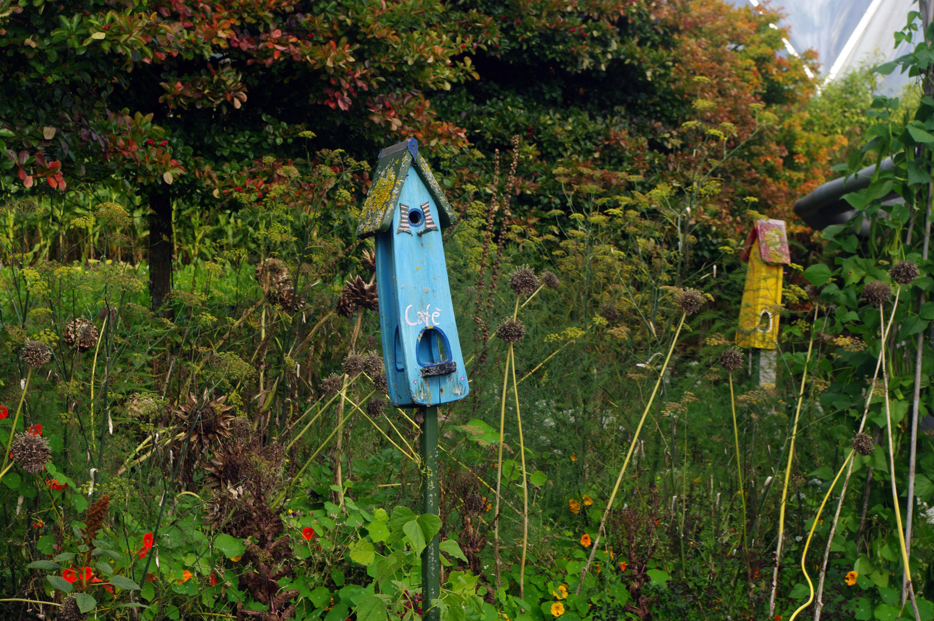 cornwall Quirky bird boxes Eden Project Cornwall
