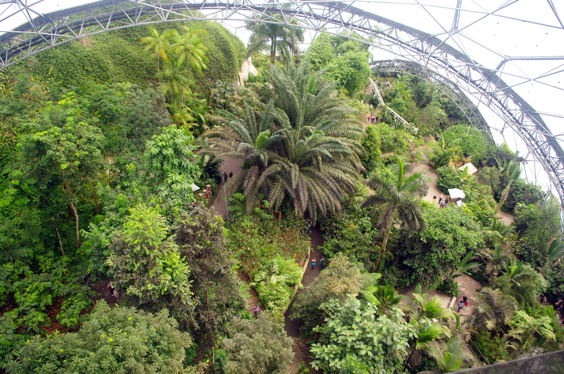 cornwall tropical biome from suspended walkway Eden Project Cornwall