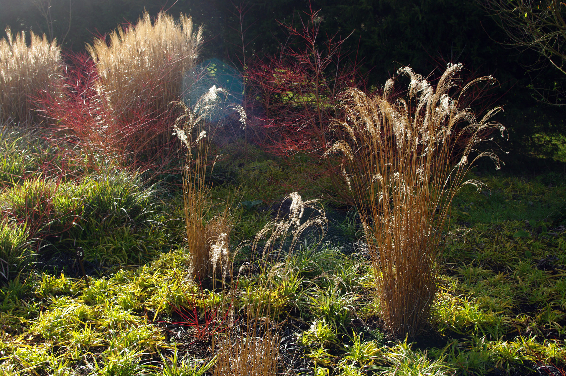 Winter Garden Anglesey Abbey grasses low sun